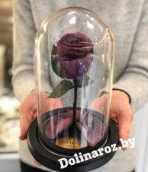Роза в стеклянной колбе (сливовая) Mini