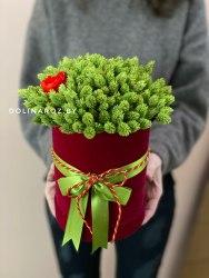 Коробка Сухоцветов №1