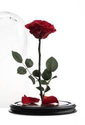 Роза в стеклянной колбе (красная)