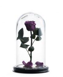Роза в стеклянной колбе (слива)