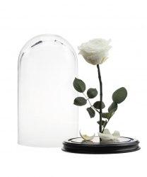 Роза в стеклянной колбе (белая)