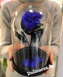 Роза в стеклянной колбе (фиолетовая) Standart+