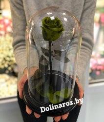 Роза в стеклянной колбе (зеленая) Standart