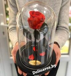 Роза в стеклянной колбе (красная) Standart