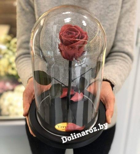 Роза в стеклянной колбе (фламинго) Standart