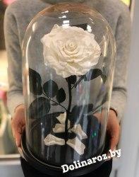 Роза в стеклянной колбе (белая) VIP