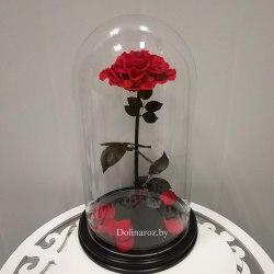 Роза в стеклянной колбе (красная) SuperVIP