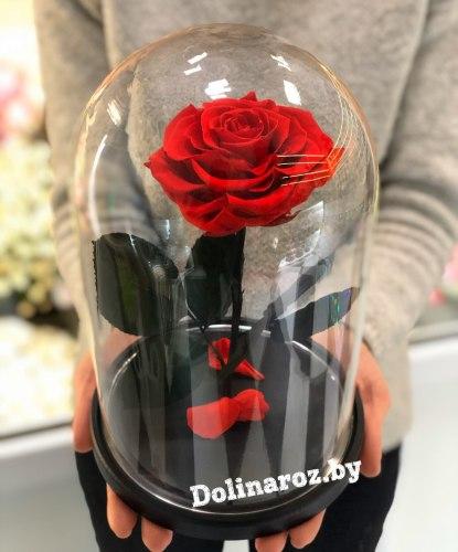 Роза в стеклянной колбе (красная) Standart+