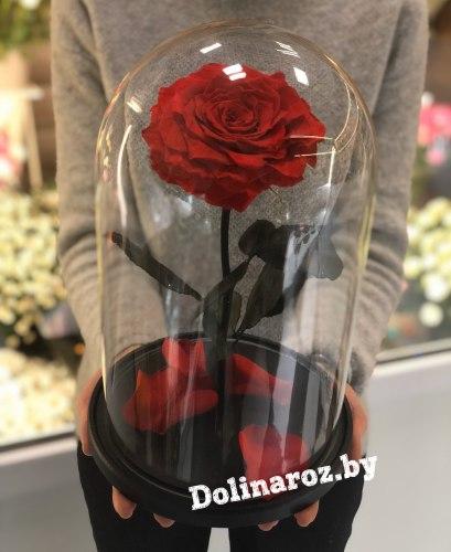 Роза в стеклянной колбе (красная) VIP