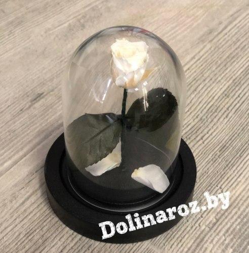 Роза в стеклянной колбе (цвет на выбор) SuperMini