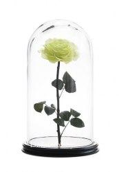 Роза в стеклянной колбе (фисташковая)