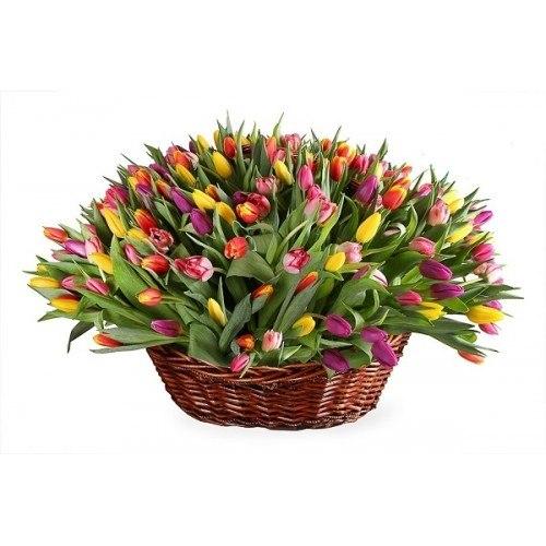 Корзина 201 тюльпан