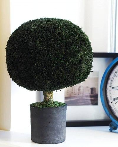 """Стабилизированное дерево """"Кипарис"""""""