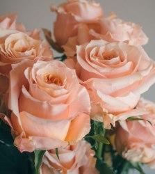 Роза Шиммер (Shimmer)