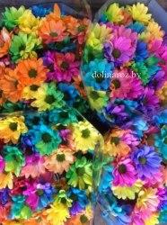 Радужная кустовая хризантема (ромашка)