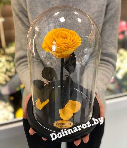Роза в стеклянной колбе (желтая) Premium