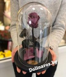 Роза в стеклянной колбе (сливовая) Standart