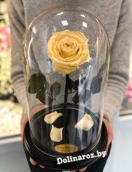 Роза в стеклянной колбе (кремово-желтая) Premium