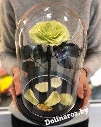 Роза в стеклянной колбе (фисташковая) VIP