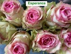 Роза Эсперанса (Esperance)