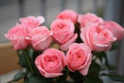 Роза Лондон Ай (London Eye) пионовидная РБ