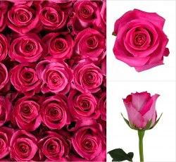 """Роза """"Topaz"""""""