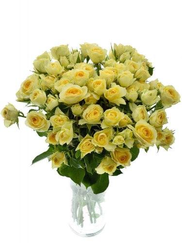 Кустовая роза Бандолеро (Bandolero)