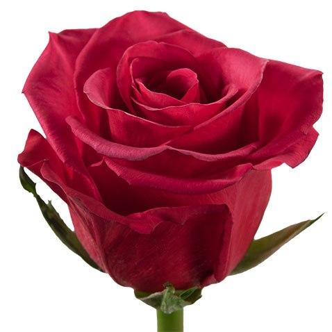 Роза Распбери (Roseberry)
