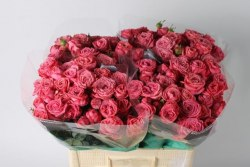 Кустовая роза Артезия (Artesia)