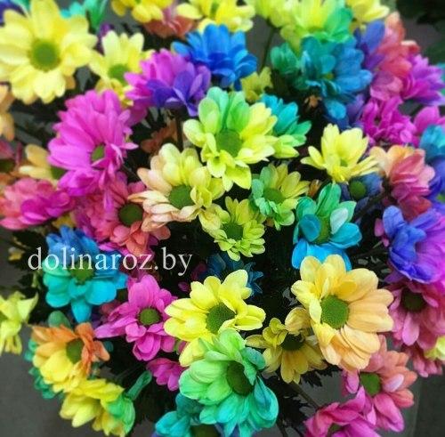 Радужная кустовая хризантема