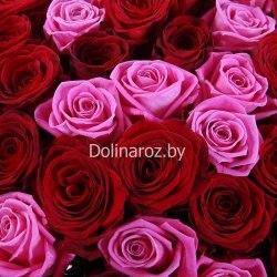"""Букет роз """"Торнадо"""" 101 роза"""