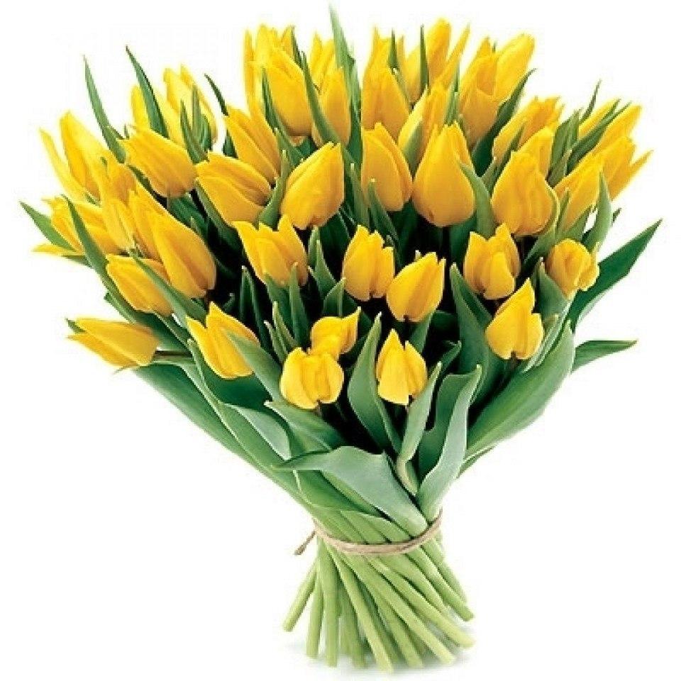 фото букет желтых тюльпанов финском заливе встречается