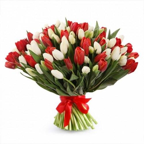 """Букет тюльпанов """"Красный и белый"""" 101 шт."""