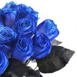 """Розы """"Синие"""""""