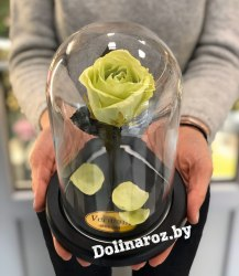 Роза в стеклянной колбе (фисташковая) Mini