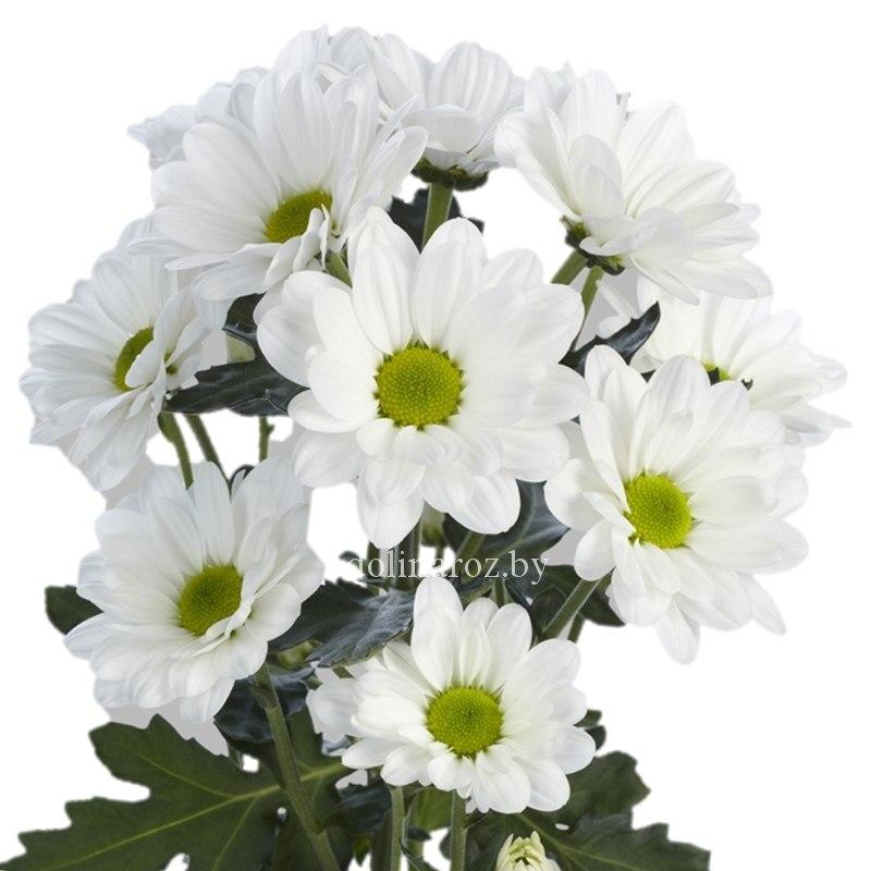 svadebnogo-kupit-tsveti-optom-v-minske-deshevo-so-sklada-ekspress-dostavka-tsvetov