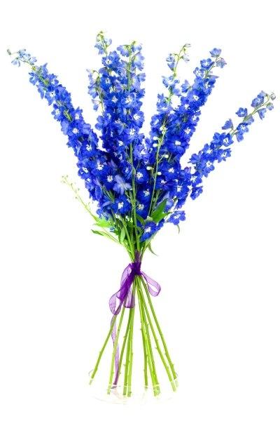 Заказ и доставка цветов в бресте подарок женщине 70