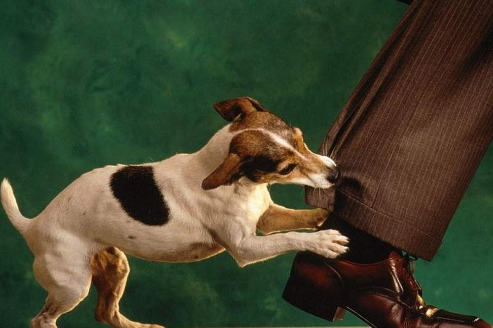 Укусила собака после прививки от бешенства