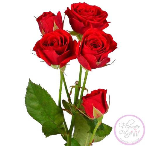 """Роза """"Руби Стар"""""""