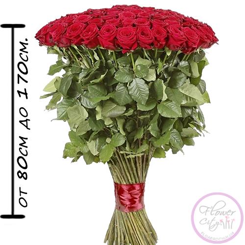 Голландская Роза сорт Freedom 80 см. - 150 см.