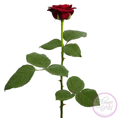 """Роза """"Гран При"""" 51 шт."""