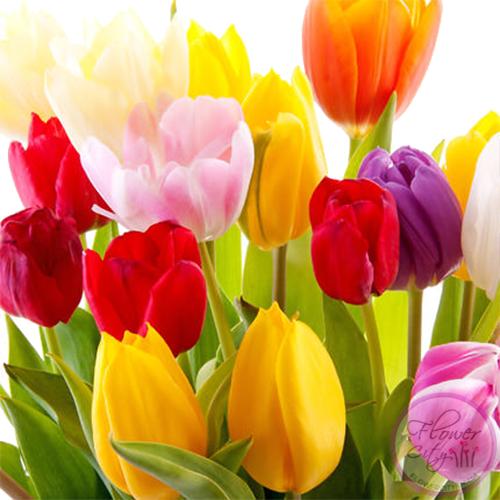 Цветочная коpзина из 101 pазноцветного Тюльпана