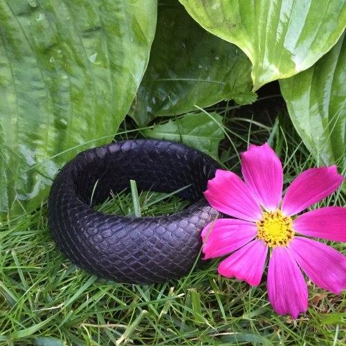 Браслет из натуральной кожи питона круглый черный