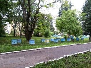 Помощь и оказание услуг по пчеловодству