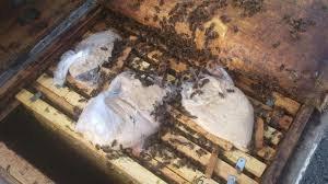 Канди (подкормка пчел)