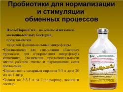 ПчелоНормоСил - биокорм живых культур 1 флакон 100 мл