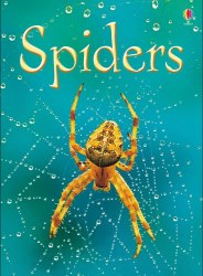 Beginners: Spiders
