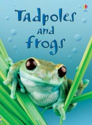 Beginners: Tadpoles and Frogs