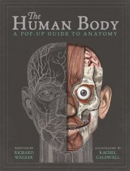 The Human Body: A Pop-Up Guide to Anatomy / Книга з віконцями