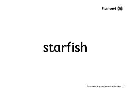 The English Ladder 4 Flashcards / Flash-картки